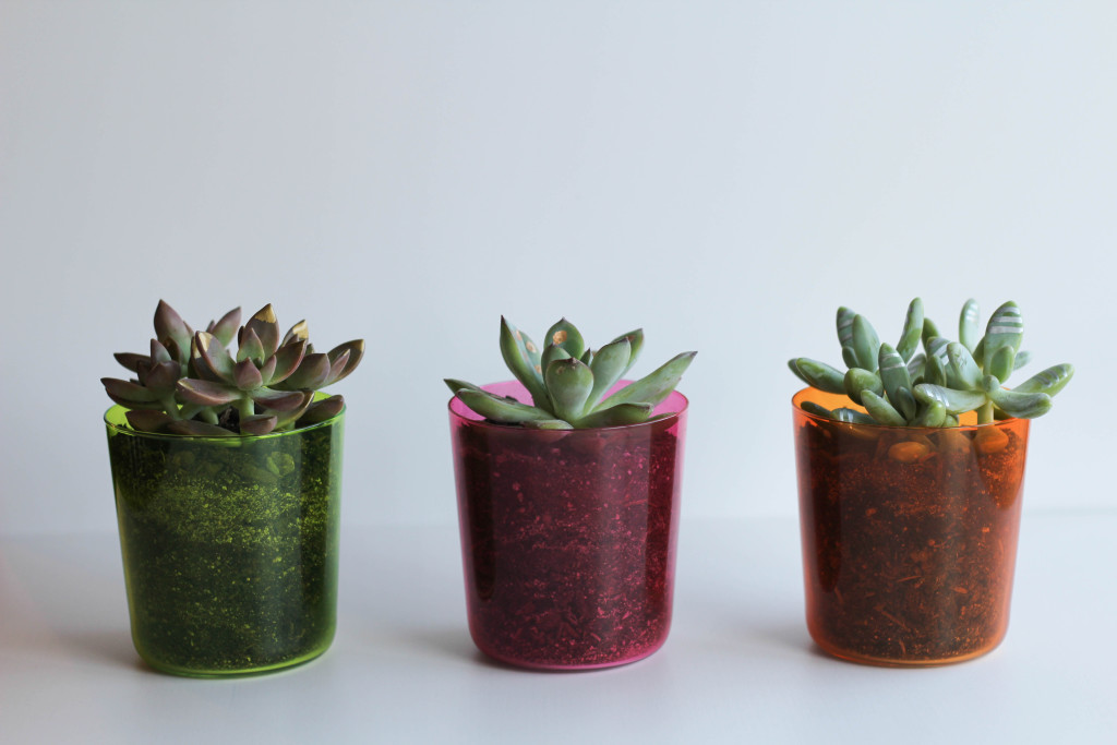 DIY Gilded Succulents